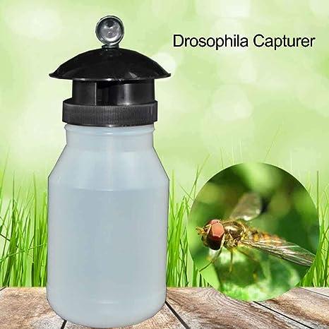 Trampa de la Avispa Atrapador Drosophila Trampa Repelente de ...