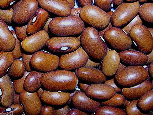 Swedish brown beans Seeds , a type of bean originally developed in (Swedish Type)