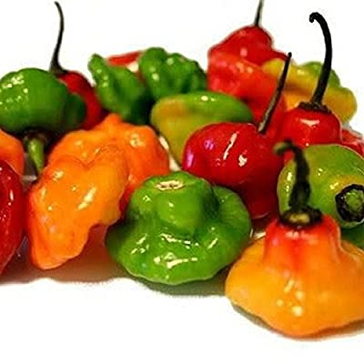 Ajicito Aji Dulce, Aji Gustoso, Cachucha Puerto Rican Sweet Pepper 50 seeds