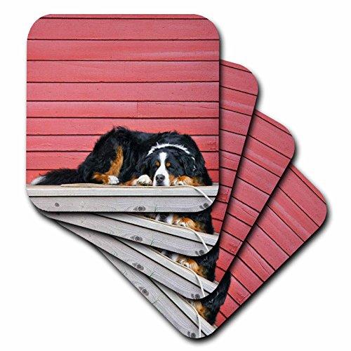 - 3dRose Colorado, Breckenridge Bernese Mountain Dog US06 BJA0055 Jaynes Gallery Ceramic Tile Coasters (Set of 4)