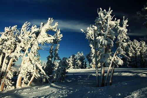 Dipper Woods, Heavenly Ski Resort, South Lake Tahoe, Nevada - Framed Photo Art Print, 11
