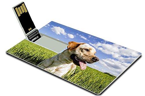 Cruzer Freedom Usb (Luxlady 32GB USB Flash Drive 2.0 Memory Stick Credit Card Size Labrador retriever in wheat field and summer freedom IMAGE 21085486)