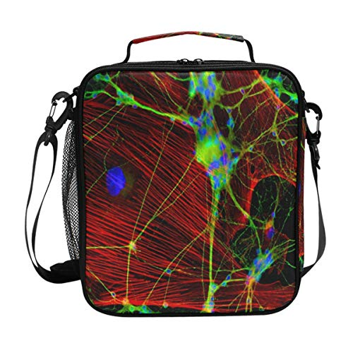 (Insulated Lunch Bag with Brain Science Synapses Print, Lunch Box Cooler Bag with Shoulder Strap for School Picnic)