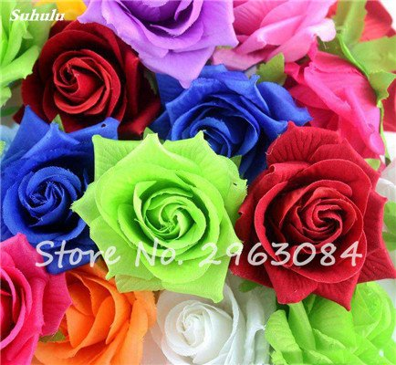Exótico Semilla Rose Rosas frescas Bonsai floral ...