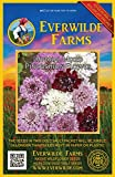 Everwilde Farms - 50 Pincushion Flower Mix Wildflower Seeds - Gold Vault Jumbo Seed Packet