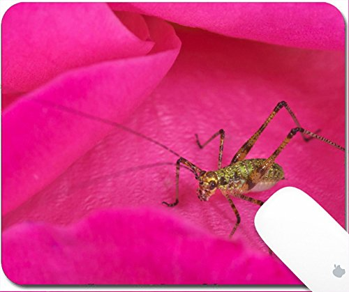 Luxlady Gaming Mousepad 9.25in X 7.25in IMAGE: 41801297 Small cricket insect pretty in pink rose