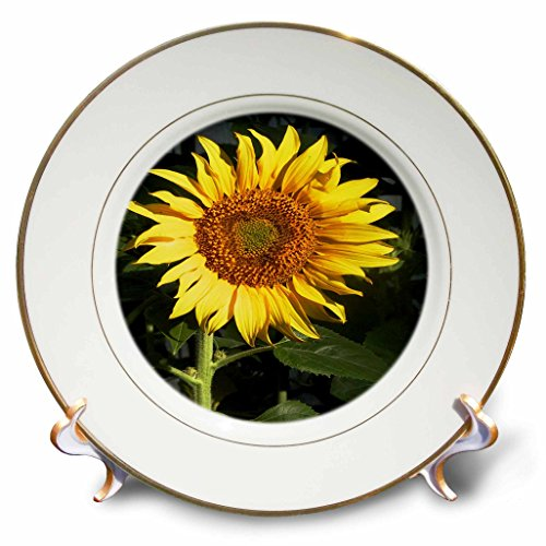 3dRose TDSwhite – Summer Seasonal Nature Photos - Floral Yellow Sunflower - 8 inch Porcelain Plate (cp_284577_1)