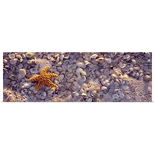 GREATBIGCANVAS Poster Print Entitled Starfish on The Beach, Lovers Key State Park, Fort Myers Beach, Gulf of Mexico, Florida by 60