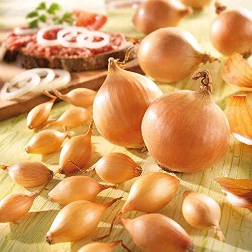 SOOGGI 50粒 玉ねぎの種 植物種子 ホームガーデン ファーム植栽 園芸 高い発芽率 簡単な栽培 家庭用