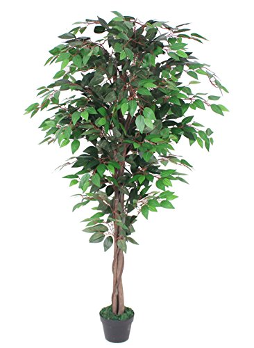 (AMERIQUE Gorgeous Ficus Capensia Artificial Tree Silk Plant with Twisted Trunks, UV Protection, Nursery Plastic Pot, Feel Real Technology, Super Quality, 5.3'/63