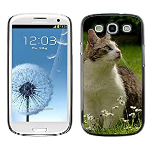 Hot Style Cell Phone PC Hard Case Cover // M00109813 Cat Pet Attention Garden Daisy // Samsung Galaxy S3 S III SIII i9300