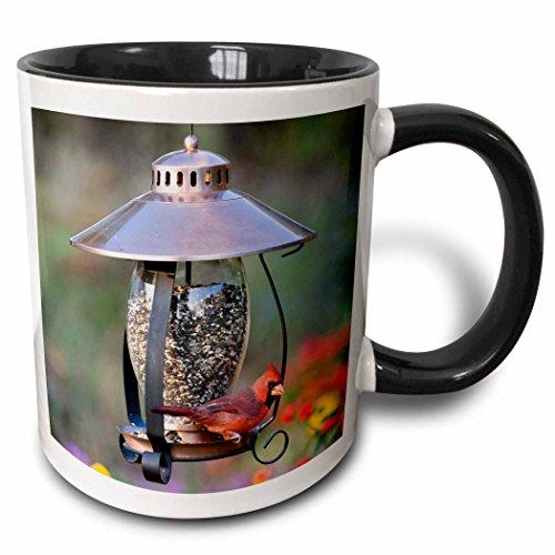 - 3dRose Danita Delimont - Birds - Northern Cardinal on copper lantern hopper bird feeder, Marion Co. IL - 15oz Two-Tone Black Mug (mug_208643_9)