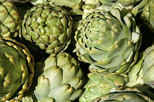 Cynara Artichoke (75 Green Globe Artichoke Cynara Scolymus Vegetable Seed)