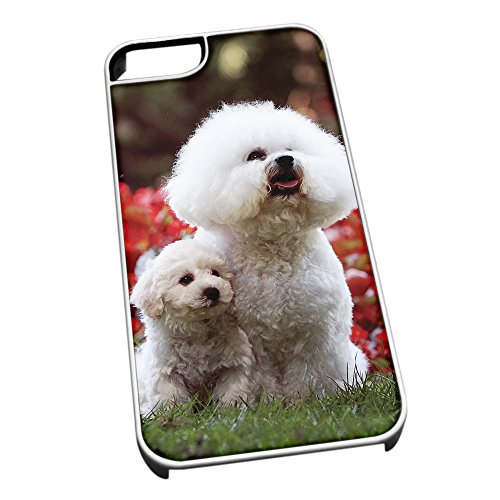 Colore: bianco, per iPhone 5/5s, motivo: Cane Bichon 0152 cane barboncino