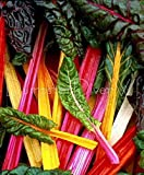 Bright Lights Swiss Chard Mulit Colored Stems 30+ Seeds Organic Non-gmo