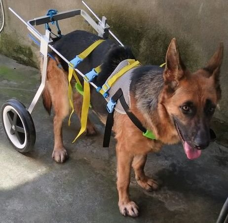 Adjustable Dog Wheelchair (L Size), for Big Dog, Hip Height 20'-24', hind Legs Rehabilitation