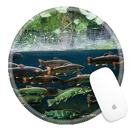 Luxlady Round Gaming Mousepad 25731629 Flock of rainbow trout swimming in blue green water seen through aquarium (Tro Freshwater Fish)