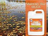 PondWorx Pond Bacteria - Formulated for Large