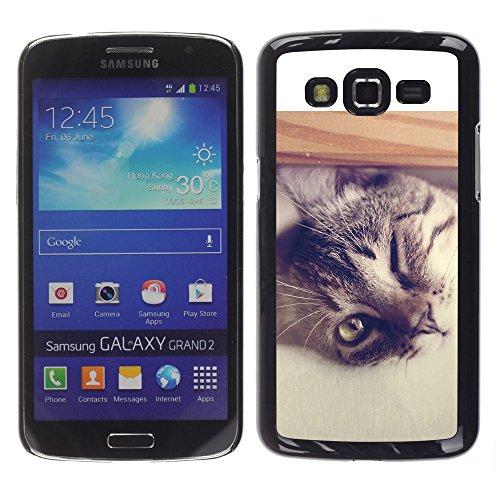 STPlus Gato en una caja Animal Carcasa Funda Rigida Para Samsung Galaxy Grand 2 #26
