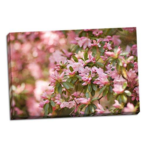 Pink Rhody III, Fine Art Photograph By: Karyn Millet; One 36