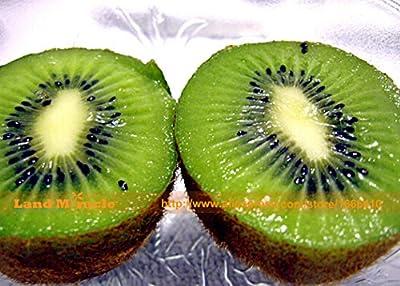 Bonsai KIWI FRUIT TREE Seeds, 1 Professional Pack, 500 Seeds/pack, Non-gmo Edible Kiwi Berry Actinidia Glaucophylla Land Miracle