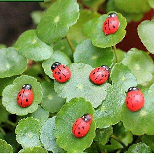 DinRoll env. 50pcs Mini coccinelles Fairy Garden Ornement DIY Micro Paysage (Rouge)
