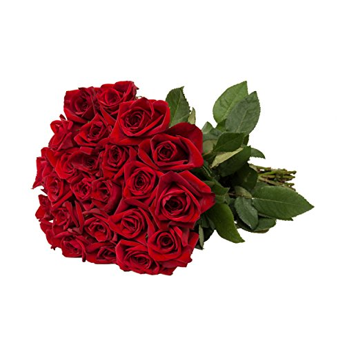 ed Roses - 20 in - 125 stems (20 Red Roses)