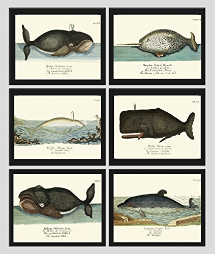 whale-art-print-set-of-6-antique-beautiful-ocean-sea-marine-nature-colored-natural-science-chart-ill