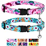 CollarDirect Cat Collar with Bell Floral Pattern 2 Pack Set Flower Adjustable Safety Breakaway Collars for Cats Kitten (Pink + Aquamarine)