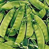 Snow Pea, Oregon Sugar Pod Peas, 1/4 pound seed pack ,ORGANIC, USA PRODUCT. PACKED BY JACOBS LADDER ENT