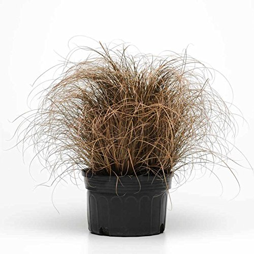 Carex company the best Amazon price in SaveMoney.es