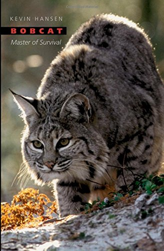 bobcat-master-of-survival