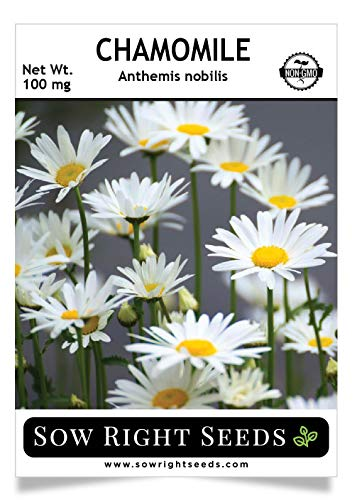 (Sow Right Seeds - Chamomile Seed for Planting - Non-GMO Heirloom Seeds - Full Instructions for Easy Planting and Growing an Herbal Tea Garden, Indoors or Outdoor; Great Gardening Gift.)