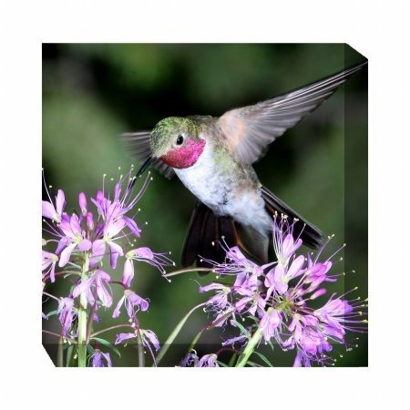 (West of The Wind 77701-24 Hummingbird #1, 24x24, Multi-Color)