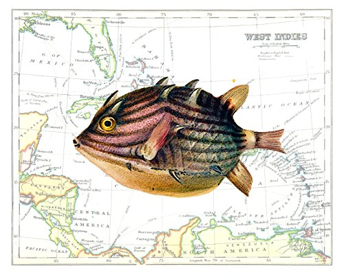 Beautiful 8x10 Puffer Fish Art Print Overlaid on a 19th Century Reproduction Map of the Caribbean West Indies. Size: 8x10 Inches (PuffMap810)