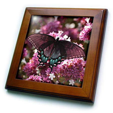 (3dRose Stamp City - Insects - Photo of a Female Tiger Swallowtail on an abelia Bush in Pink and Teal - 8x8 Framed Tile (ft_306495_1))