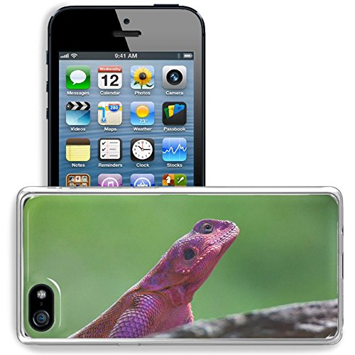 MSD Apple iPhone 5/iPhone 5S/iPhone SE Clear case Soft TPU Rubber Silicone Bumper Snap Cases iPhone5/5S IMAGE ID 35532336 Mwanza flat headed rock agama Agama mwanzae sitting on a rock -