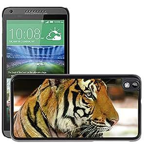 Super Stella Slim PC Hard Case Cover Skin Armor Shell Protection // M00104396 Tiger Cat Portrait // HTC Desire 816