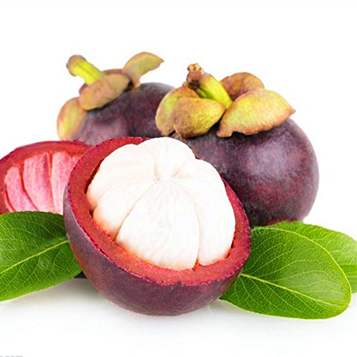 EgBert 50Pcs/Pack Mangoustan Graines Tropical Sour Sweet Fruit Graines Jardin Plantes Arbre Bonsaï