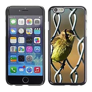 iBinBang / Funda Carcasa Cover Skin Case - Pájaro lindo del bebé del resorte Naturaleza Sol - Apple iPhone 6