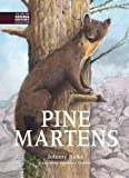 Pine Martens (The British Natural History Collection)