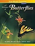 img - for A Shimmer of Butterflies book / textbook / text book