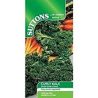 Suttons Seeds 166112 Graines de chou Kale frisé nain