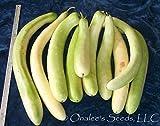 24+ Cucuzzi Seeds-italian Edible Gourd / Italian Squash
