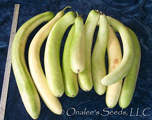 24+ Cucuzzi Seeds-italian Edible Gourd / Italian Squash by onaleei (Image #2)'
