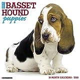 Just Basset Hound Puppies 2018 Wall Calendar (Dog Breed Calendar)
