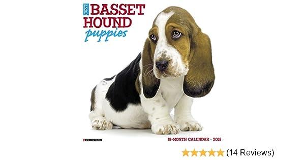 Just Basset Hound Puppies 2018 Wall Calendar Dog Breed Calendar