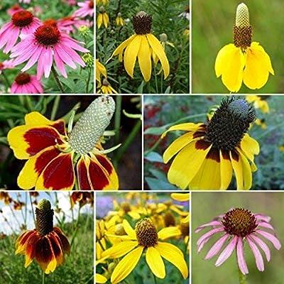 David's Garden Seeds Flower Coneflower Conehead Mix SL5558 (Multi) 500 Non-GMO, Open Pollinated Seeds : Garden & Outdoor
