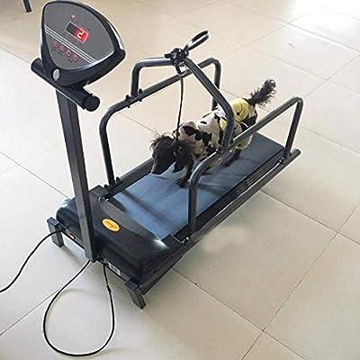 Cinta para correr para perros, Fitness Fitness Treadmill ejercicio ...