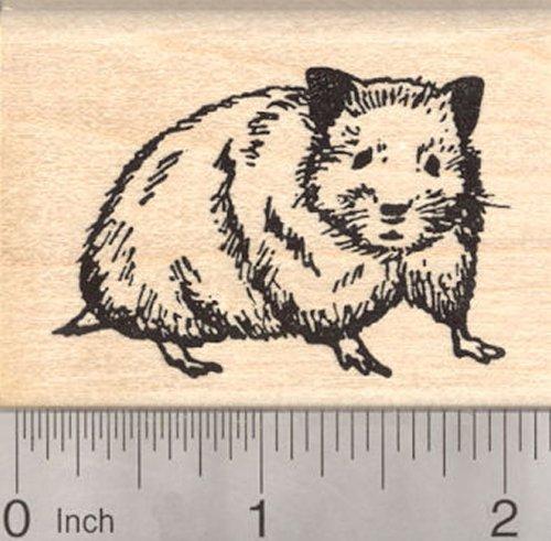 Hamster Rubber Stamp